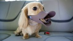 Duck Bill Dog Muzzles by Oppo
