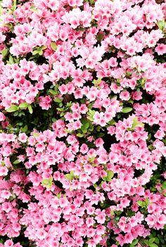 flowers - Pesquisa Google