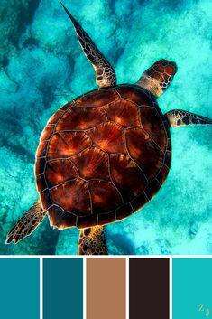 ZJ Colour Palette 25 #colourpalette #colourinspiration