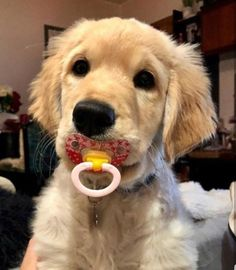 More cute animals here! Super Cute Puppies, Baby Animals Super Cute, Cute Baby Dogs, Cute Little Puppies, Cute Dogs And Puppies, Cute Little Animals, Cute Funny Animals, Funny Dogs, Doggies