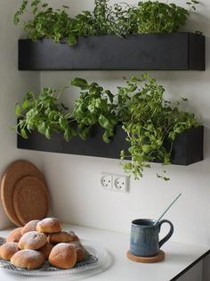 Black and basic wall boxes are an ideal option for growing herbs indoors within easy reach of your kitchen and preparation surface. Grow your own herbs all year long in a well-lit area saving you money at the market and keeping your space green and happy! Kitchen Herbs, Herb Garden In Kitchen, Diy Herb Garden, Home And Garden, Green Garden, Garden Ideas, Wall Herb Garden Indoor, Plants In Kitchen, Herbs Garden