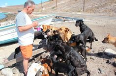 Couple Rescues Over 30 Dogs And Cats While On Vacation In Mexico