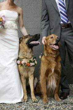 Fresh floral dog collar for wedding pink spray roses orange ranunculus German Shepherd