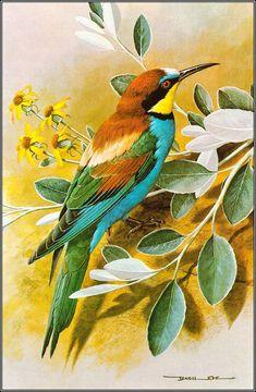 Ideas For Colorful Bird Painting Draw Pretty Birds, Beautiful Birds, Bird Illustration, Bird Drawings, Bird Pictures, Vintage Birds, Colorful Birds, Wildlife Art, Wild Birds