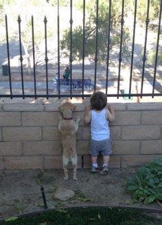 This dog that will spy on the neighbors to catch a glimpse of the girl next door. | 27 Dogs That Will Do Anything For Kids