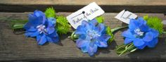 Rachel and I met last spring after she had sent me an email with beautiful images of blue, purple and green spring wedding flowers. Green Spring Wedding, Spring Wedding Flowers, Groom Boutonniere, Boutonnieres, Thistle Wedding, Blue Delphinium, Green Button, Father Of The Bride, Chrysanthemum