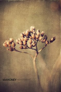 Weed By Mahoney Photography WA