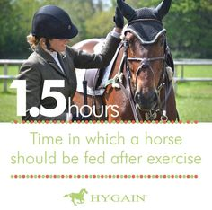 Feeding post exercise is critical to the recovery of the horses. Following exercise, after a cool down phase horses should be immediately provided with hay and water. Once the horses have consumed hay and drunk water, their fully fortified complete or concentrated feed should be provided within 1.5 hours after exercise. To assist recovery the complete feed or concentrate should contain vitamins, minerals, carbohydrates, fat and branched chain amino acids.
