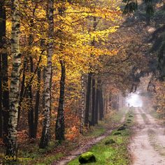 someone's coming - #GdeBfotografeert Great Shots, Photographs, Photos, Autumn Leaves, Country Roads, Pictures, Fall Leaves, Autumn Leaf Color