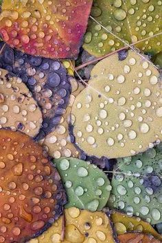 Water droplets on colorful leaves