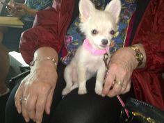 Xena, Warrior Princess Dog 1