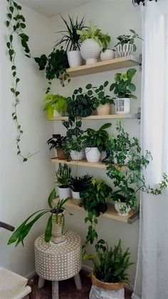 60 Plant Stand Design Ideas for Indoor Houseplants - Page 51 of 67 - LoveIn Hom. 60 Plant Stand Design Ideas for Indoor Houseplants - Page 51 of 67 - LoveIn Home Ivy Plants, Cool Plants, Potted Plants, Wall Of Plants Indoor, Lowes Plants, Indoor Plant Shelves, Shade Plants, Indoor Plant Stands, Wall Garden Indoor