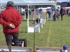 Flyball - what's it all about Outdoor Dog, Dog Training Tips, The Great Outdoors, British, Dogs, Pet Dogs, Doggies, Outdoor Living, England