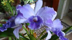 A minha família e a paixão por orquídeas