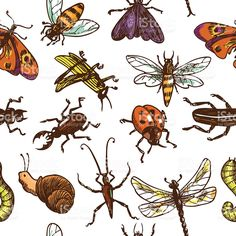 Insects sketch seamless pattern color royalty-free stock vector art