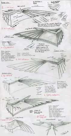 READ BEFORE YOU CRITIQUE! A wing design for my character Rabian who I have drawn once here :3 I have been working on this wing design for over a year now X-x But it just has so much info about it t...