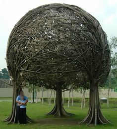A unique tree with braided branches in an unusual arboretum. This is an amazing nature picture, strange landscaping structure and weird park pic.