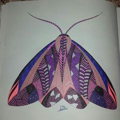 Our Foreign Rights Team Decorating Their Office With A Moth From Millie Marottas Animal Kingdom Milliemarotta Animalkingdom Colouringbooks Antistress