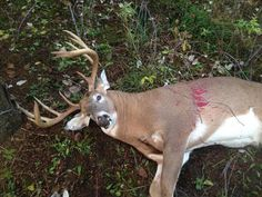 11 Point  Wexford County.