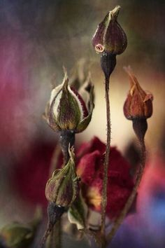 crescentmoon's garden .............? artist