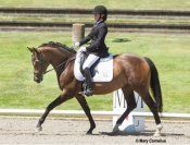 Exceptional young horse with great rideability. Definite FEI potential, easy to train, very suitable for AA or JR Rider. This talented mare can take you all the way! Scores up to 7.76 in the USEF 4 year-old test and already schooling the 5 yo test for 2014 with ease. Won JR Dressage Seat Equitation class at Dressage at Devonwood with 79%. $65,000