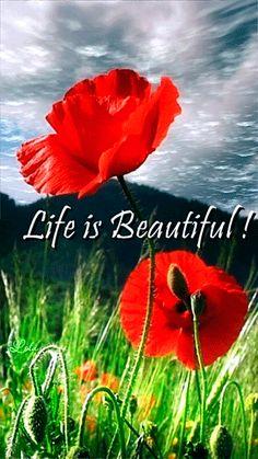 Жизнь прекрасна (красные маки) 360х640 - анимация на телефон №995018