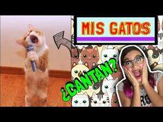 ¡MIS GATOS PUEDEN HACER CUALQUIER COSA! ♥ Lulu99 - VER VÍDEO -> http://quehubocolombia.com/mis-gatos-pueden-hacer-cualquier-cosa-%e2%99%a5-lulu99    Holaa! en el video de hoy les voy a mostrar todas las locuras que hacen mis gatos!, espero que te guste mucho y recuerda darle like al video si te gustó! Suscribete si te gustan mis videos!:  VOTA POR MI PARA LOS KCA AQUÍ :  O vota por Twitter utilizando los HT: #KCAColombia #Lulu99 ¡Sigueme...
