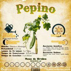 Pepino2.jpg (700×700)