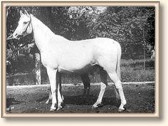 DARIBBA (Amurath-Sahib x Epizoda, by Trypolis) 1950 grey mare