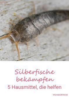With these 5 home remedies you can fight silverfish effectively. - Home Technology Diy Cleaning Products, Cleaning Hacks, Life Hacks, Home Technology, Housekeeping, Clean House, Home Remedies, Good To Know, Helpful Hints
