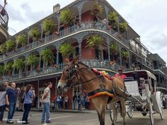 Visiter la Nouvelle-Orleans : Que faire et voir en 7 coups de coeur