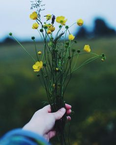 Buttercups in the meadow. See this Instagram photo by @kaatiiieeee_