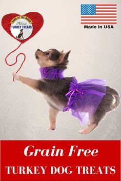 valentine's cupid dog