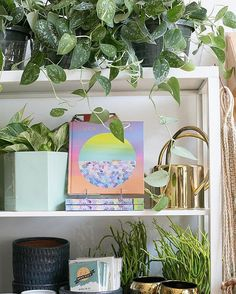 Satin pothos vines reaching into the frame. - The ZEN Succulent Sun Plants, Fruit Plants, Water Plants, Tropical Plants, Live Plants, Tall Indoor Plants, Hanging Plants, Pothos Vine, Rainforest Plants
