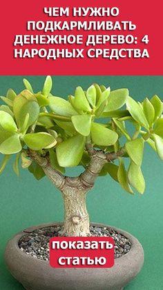 Small Gardens, Bonsai, Succulents, Flowers, Succulents Garden, Plants, Cacti And Succulents, Cactus, Little Gardens