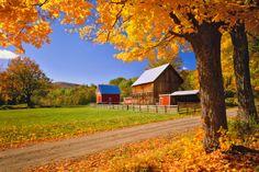 Rustic New England farm with Autumn Sugar Maples (East Orange, Vermont)