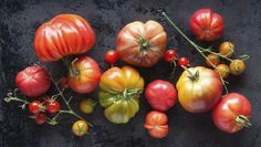 Growing Plump Tomatoes Our how-to guide for the organic gardener.Our how-to guide for the organic gardener.To Growing Plump Tomatoes Our how-to guide for the organic gardener.Our how-to guide for the organic gardener. Tips For Growing Tomatoes, Growing Tomato Plants, Growing Tomatoes In Containers, Growing Vegetables, Grow Tomatoes, Gardening Vegetables, Baby Tomatoes, Dried Tomatoes, Cherry Tomatoes