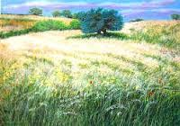 Image result for franco azzinari Lavender Fields, Wild Flowers, Poppies, Grass, Vineyard, Italy, Plants, Outdoor, Outdoors