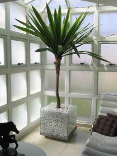 dicas de plantas decorativas para sala