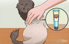 4 Ways to Reduce Cat Dander - wikiHow