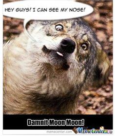 Dammit moon moon.