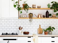 edible-kitchen-plants-00
