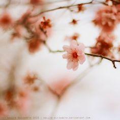 cherry blossom ice cream by hallie-elizabeth.deviantart.com