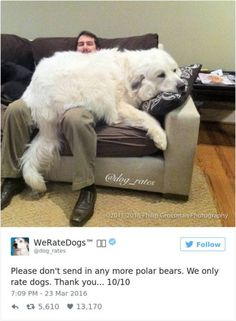 20 Hilarious Responses From 'We Rate Dogs' After People Failed to Send Dog Photos Cute Funny Animals, Funny Animal Pictures, Dog Pictures, Funny Dogs, Cute Dog Memes, Funny Bears, Cute Puppies, Cute Dogs, Dogs And Puppies