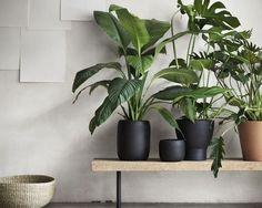 Groepje kamerplanten