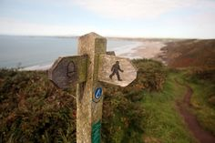 Wales Coastal Path, Paths, Bird, Outdoor Decor, Birds