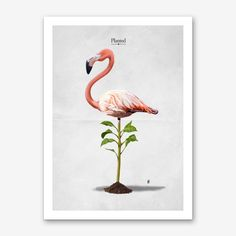 Planted (Wordless), an art print by Rob Art Plant Art, Flamingo Print, Inspirational Wall Art, State Art, Funny Gifts, Wall Art Decor, Fine Art Prints, Things To Come, Artwork