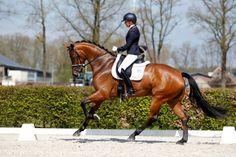 Wetenschappelijk bewezen: 'Ruiters zijn betere mensen' • Horses.nl