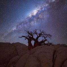 the milkyway over a boabab tree and rocks, Botswana by Hougaard Malan