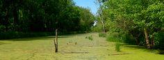Las plagas de algas, evidencia del mal estado de conservación de los ríos